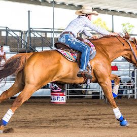 Flat Out by Sarah Sullivan - Sports & Fitness Other Sports ( #dalby, #sarahsullivanphotography, #barrelracing, #qbra )