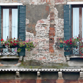 Windows by Tony Huffaker - Buildings & Architecture Other Exteriors ( old, venice, box, windows, flowers, italy )