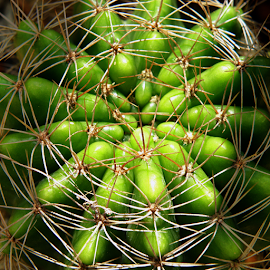 Nature Web of Cactus by Steven De Siow - Nature Up Close Other plants ( abstract, abstract art, nature up close, natural, cactus )