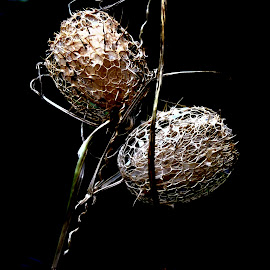 DRY PHYSALIS by Wojtylak Maria - Nature Up Close Other plants ( plant, dry, decorative, autumn, garden, physalis )