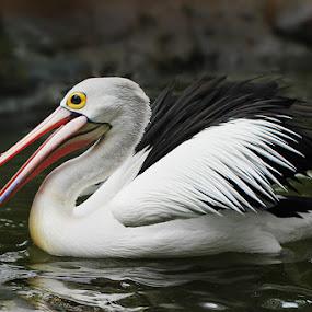 by Dadan Supardan - Animals Birds