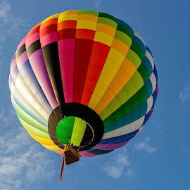 Colorful hot air balloons on the blue sky by Jan Gorzynik - Transportation Other ( ride, hotair, colorful, bright, transportation, travel, vibrant, race, heat, float, adventure, transport, mid-air, trip, celebrate, activity, airship, symbol, carnival, green, sport, journey, shape, fun, balloon, up, flight, vacation, blue, color, fly, aircraft, basket, airy, inflate, hot, summer, air, celebration, high, soar )