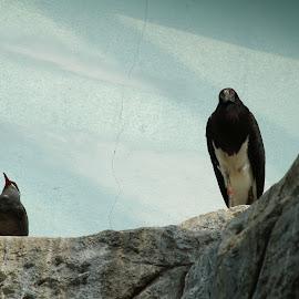 by Bill Givens - Novices Only Wildlife ( zoo, birds, novice, wildlife,  )