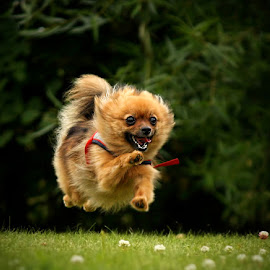 I believe I can flyyyy! :) by Jane Bjerkli - Animals - Dogs Running