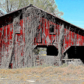 Thru the Red Barn by Kevin Hill - Buildings & Architecture Decaying & Abandoned ( farm, red, nature, barn, farmland, barns,  )