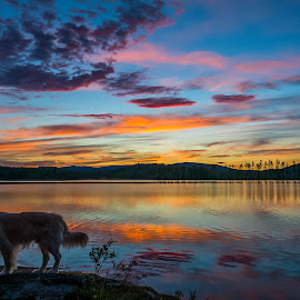 Summernight Swedish Lapland by Ewa Nilsson - Landscapes Weather ( water, clouds, goldenretriever, mountain, scandinavia, lapland, sunset, trees, dog )