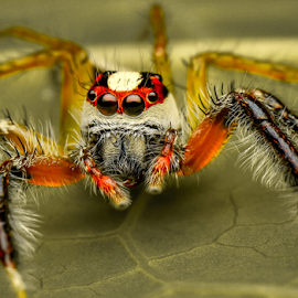 The Jumper's profile by Dave Lerio - Animals Insects & Spiders
