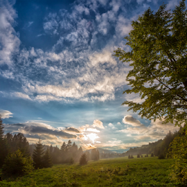 Matic poljana by Stanislav Horacek - Landscapes Forests