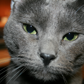 by Michael Phillips - Animals - Cats Portraits (  )