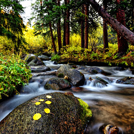 Colorado Rocky Mountain Creek in the fall by Tony Lobato - Landscapes Waterscapes ( stream, waterscape, fall, rocky mountains, creek, colorado, long exposure, landscape,  )