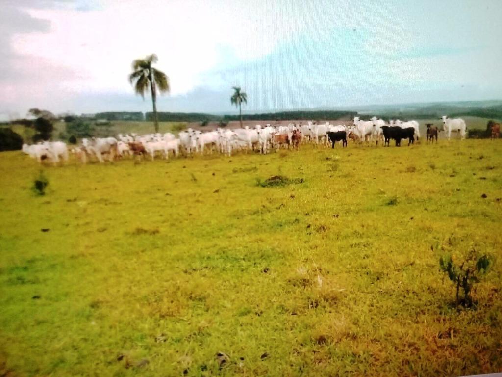 Fazenda rural à venda, Parque Paineiras, Itapeva.