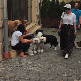 Wonder by Cosmin Tomescu - City,  Street & Park  Street Scenes ( dogs, tattoos, wonder, poodle dog, candid, women )