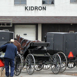 Buggies in Kidron by Christine B. - Transportation Other ( amish, buggy, ohio, farmer, horse, kidron )