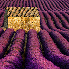 Valensole Sunset by David Long - Landscapes Prairies, Meadows & Fields ( provence, lavender, valensole )