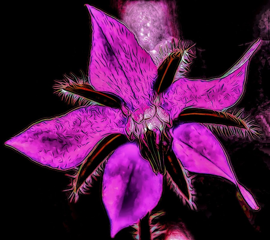 Digital Art Flower by Dave Walters - Digital Art Things ( sony hx400v, topaz, abstract, purple colors, digital art )