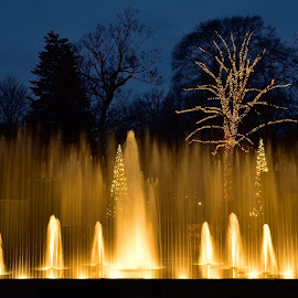 Christmas Fountains by Tarea J Roach-Pritchett - City,  Street & Park  Fountains ( water, lights, fountains, christmas, gardens, golden )