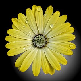OLI osteo 01 by Michael Moore - Flowers Single Flower (  )