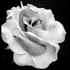 by Judy Friedman - Black & White Flowers & Plants