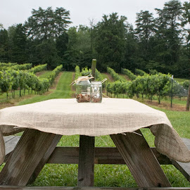Winery by Sandra Hartsell - Artistic Objects Furniture ( weddings, summer, winery, north carolina, grape vine )
