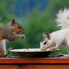 Brown & White by Mark Turnau - Animals Other Mammals