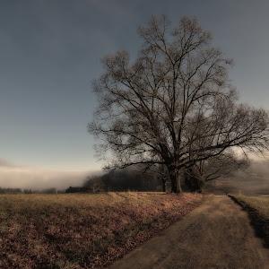 #18 Foggy morn.jpg