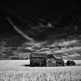 Abandoned house in a field. by Gale Perry - Buildings & Architecture Decaying & Abandoned ( crop field, palouse, black and white, house, abandoned,  )