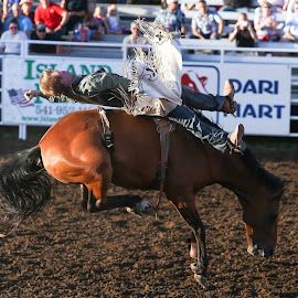 Broncin by Justin Quinn - Sports & Fitness Rodeo/Bull Riding