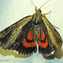 Ultronia Underwing Moth