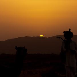 Mystique of Desert by Avanish Dureha - Landscapes Sunsets & Sunrises ( pushkar, sunset, rajasthan, dureha@gmail.com, camels, india, avanish dureha )