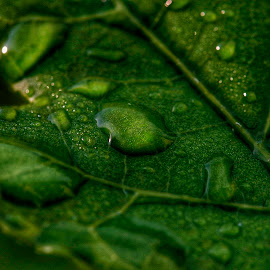 by Pavel Vlček - Nature Up Close Natural Waterdrops ( #plants #nature #water #waterdrops )