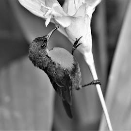 by Koh Chip Whye - Black & White Animals (  )