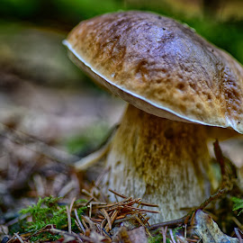by Marco Bertamé - Nature Up Close Mushrooms & Fungi