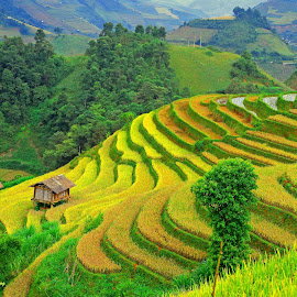 Season of grain on the stairs by Hong Huy Phuong - Landscapes Prairies, Meadows & Fields ( vietnam )