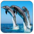 App Dolphin Live Wallpaper APK for Windows Phone