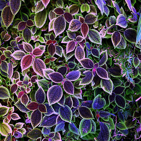 Natures Carpet by Jeremy Barton - Nature Up Close Flowers - 2011-2013 ( plant, colour, nature, green, leaves )