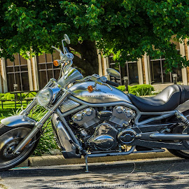 Harley Davidson (Silver Shadow) by John Guest - Transportation Motorcycles ( harley davidson, silver, v-engine, motorcycle, city )