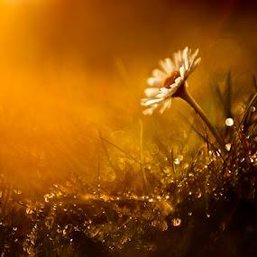 April is coming by Balázs Kovács - Nature Up Close Flowers - 2011-2013 ( proteus, lights, april, nature, plants, flower )