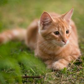 Zorrito juagando  by Annette Flottwell - Animals - Cats Kittens ( kitten, cat, tomcat, matou, chat, zorito, gatito,  )