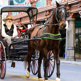 Horse and Buggy by Judy Rosanno - Transportation Other ( rodeo parade 2016, san antonio western heritage parade and cattle drive )