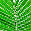 greeny by Erl de Jose - Nature Up Close Leaves & Grasses ( green, greenery, nature up close, leaves, garden,  )