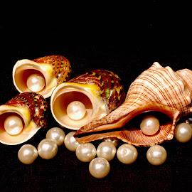 seashells and pearls by Adjie Tjokrosoedarmo - Artistic Objects Still Life ( conch, pearls, seashells, hermit crabs )