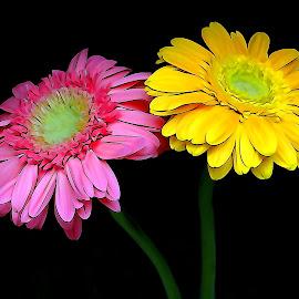 Pink-Yellow by Asif Bora - Digital Art Things (  )