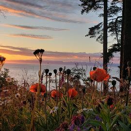 Salish Sea sunset shot by Gene Richardson - Instagram & Mobile Android
