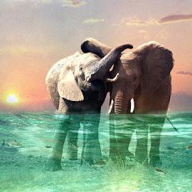 Best Buddies by Bjørn Borge-Lunde - Digital Art Animals ( fantasy, wild animal, elephants, wilderness, nature, elephant, wildlife, africa )