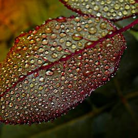 Tell Me Your Story by Marija Jilek - Nature Up Close Leaves & Grasses