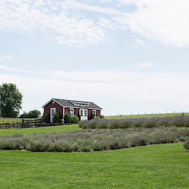White Oak Lavender Farm, Harrisonburg, VA by Lori Rider - Buildings & Architecture Other Exteriors