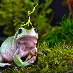 Frogs and Grashopers by JudiEndjun Ultrasound - Animals Amphibians