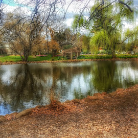 Castlemaine park by Feona Green-Puttock - Instagram & Mobile Android ( abstract, water, park, digital art, lake )