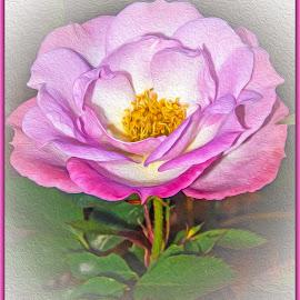 Oil Paint Rose by Dawn Hoehn Hagler - Digital Art Things ( rose, arizona, tohono chul park, tucson, garden, oil paint, flower, photoshop )