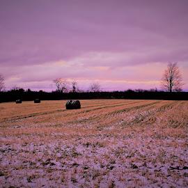 Sunset by Linda    L Tatler - Landscapes Prairies, Meadows & Fields